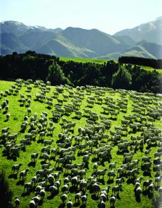 Paddock to Plate | Australian Meat News